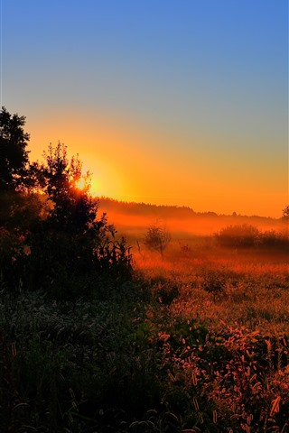 iPhone Wallpaper Morning, trees, grass, fog, dawn, sunrise
