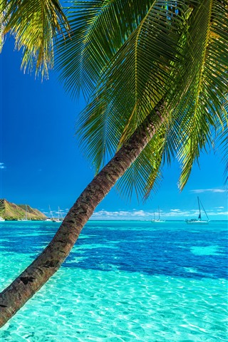 iPhone Wallpaper Palm trees, blue sea, summer