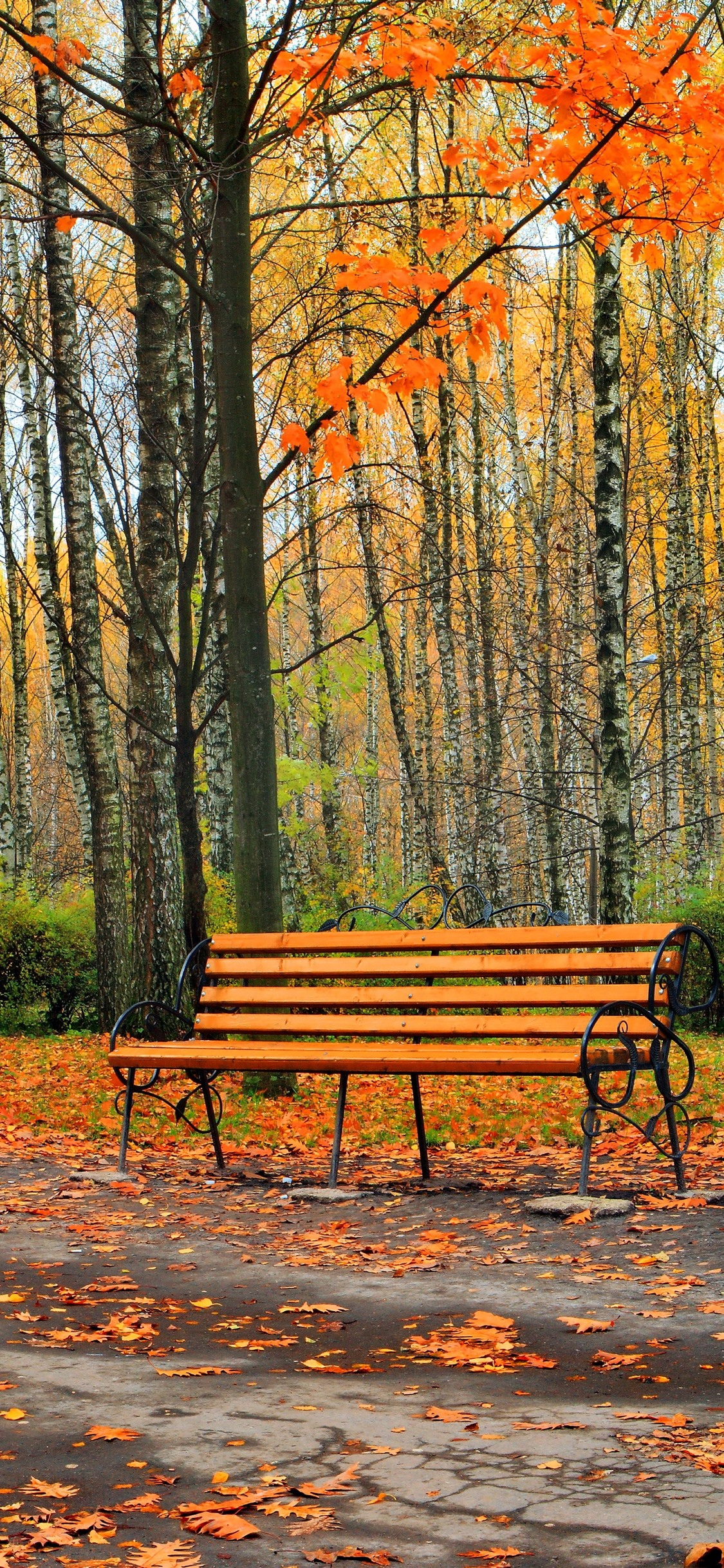 Park Trees Yellow Leaves Bench Road Autumn 1242x2688
