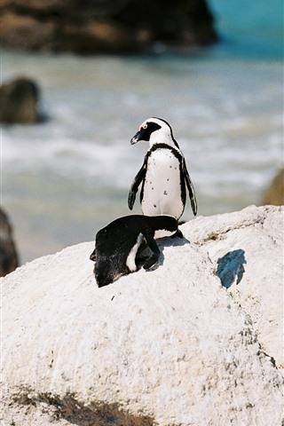 iPhone Fondos de pantalla Pingüino, mar, rocas