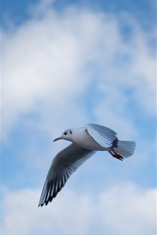 iPhone Fondos de pantalla Vuelo de Paloma, cielo azul, nubes, pájaro
