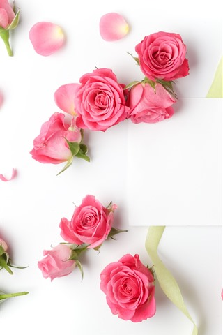 iPhoneの壁紙 ピンクのバラ、白い背景