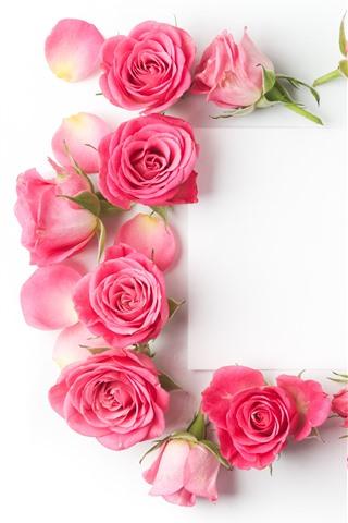 iPhone Fondos de pantalla Rosas rosas, papel blanco.