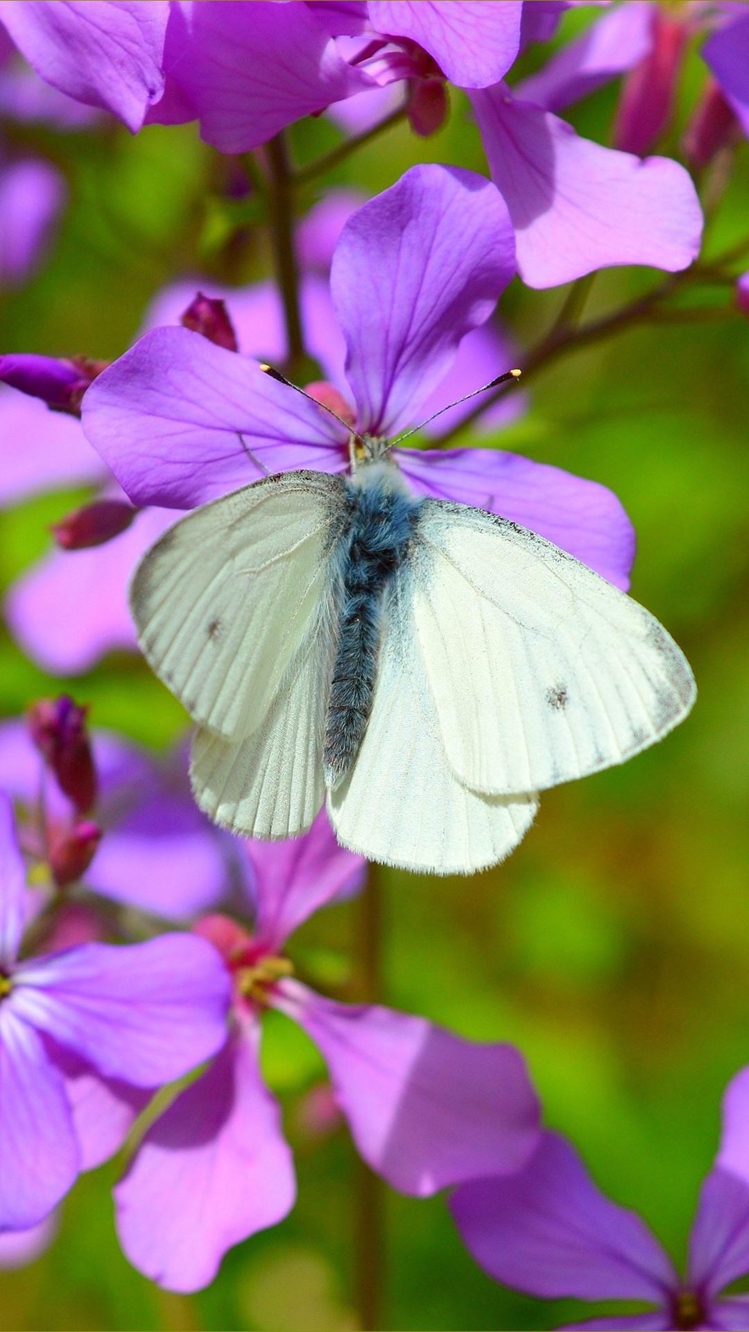 Fondos de pantalla mariposa blanca