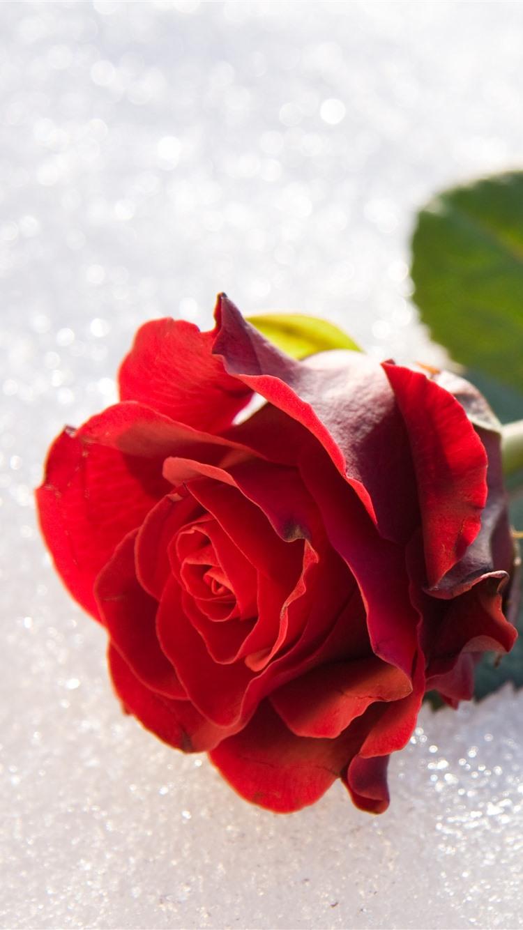 Wallpaper red rose petals stem leaves 7680x4320 uhd 8k - Red rose petals wallpaper ...