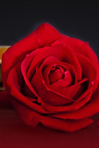 iPhone Wallpaper Red roses, book, romantic