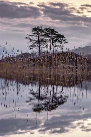 iPhone Fondos de pantalla Cañas, estanque, árboles, nubes, atardecer