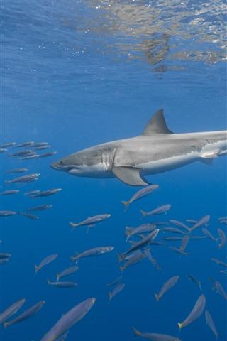 iPhone Fondos de pantalla Animales marinos, tiburones, peces, bajo el agua