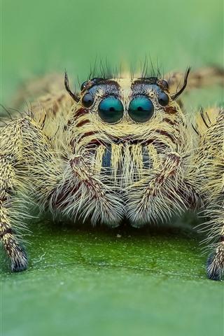 iPhone Fondos de pantalla Fotografía macro de araña, mira, ojos