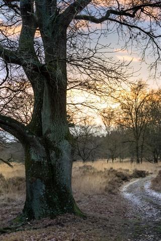 iPhone Wallpaper Trees, grass, path, evening