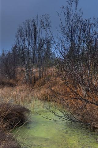 iPhone Fondos de pantalla Árboles, hierba, charco, otoño