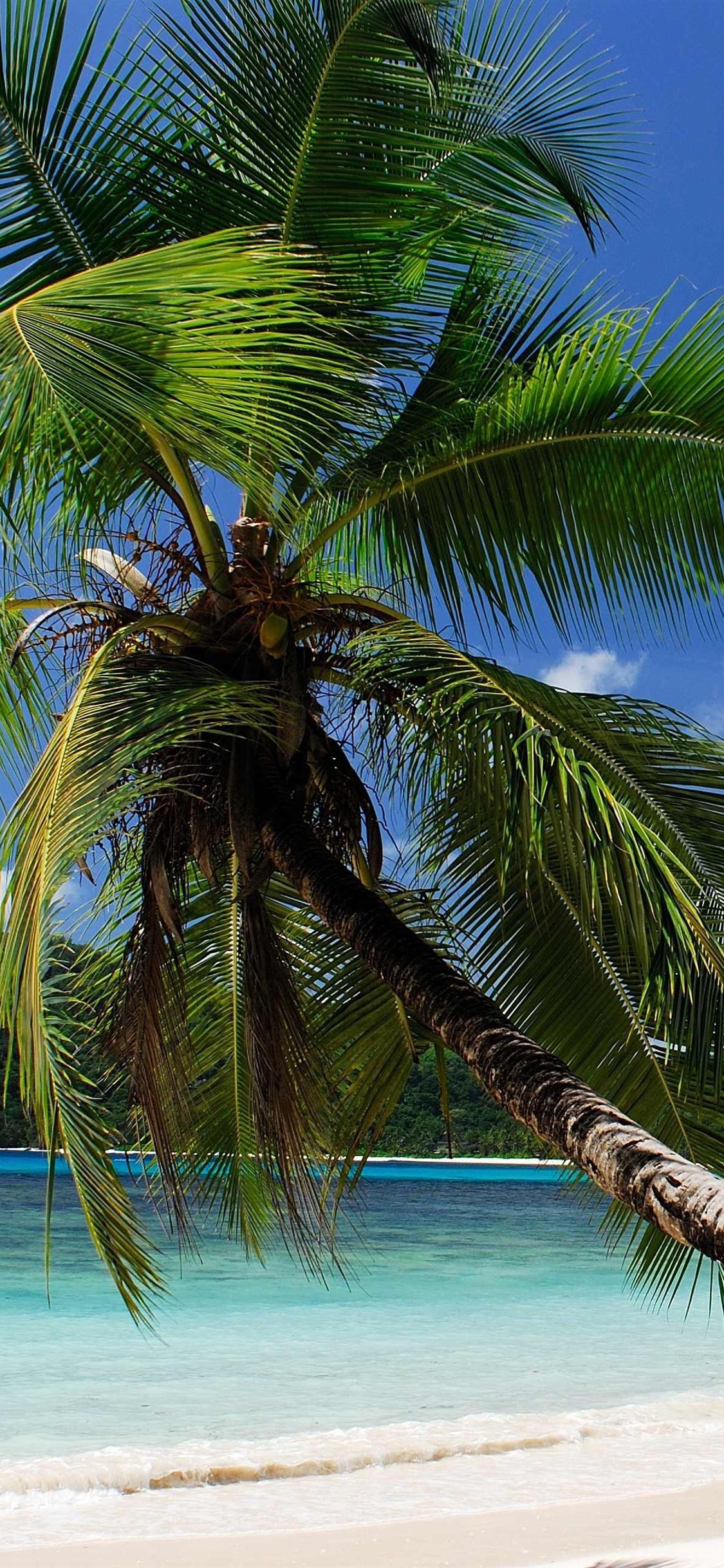 Tropical Sea Beach Palm Trees 1125x2436 Iphone Xs X