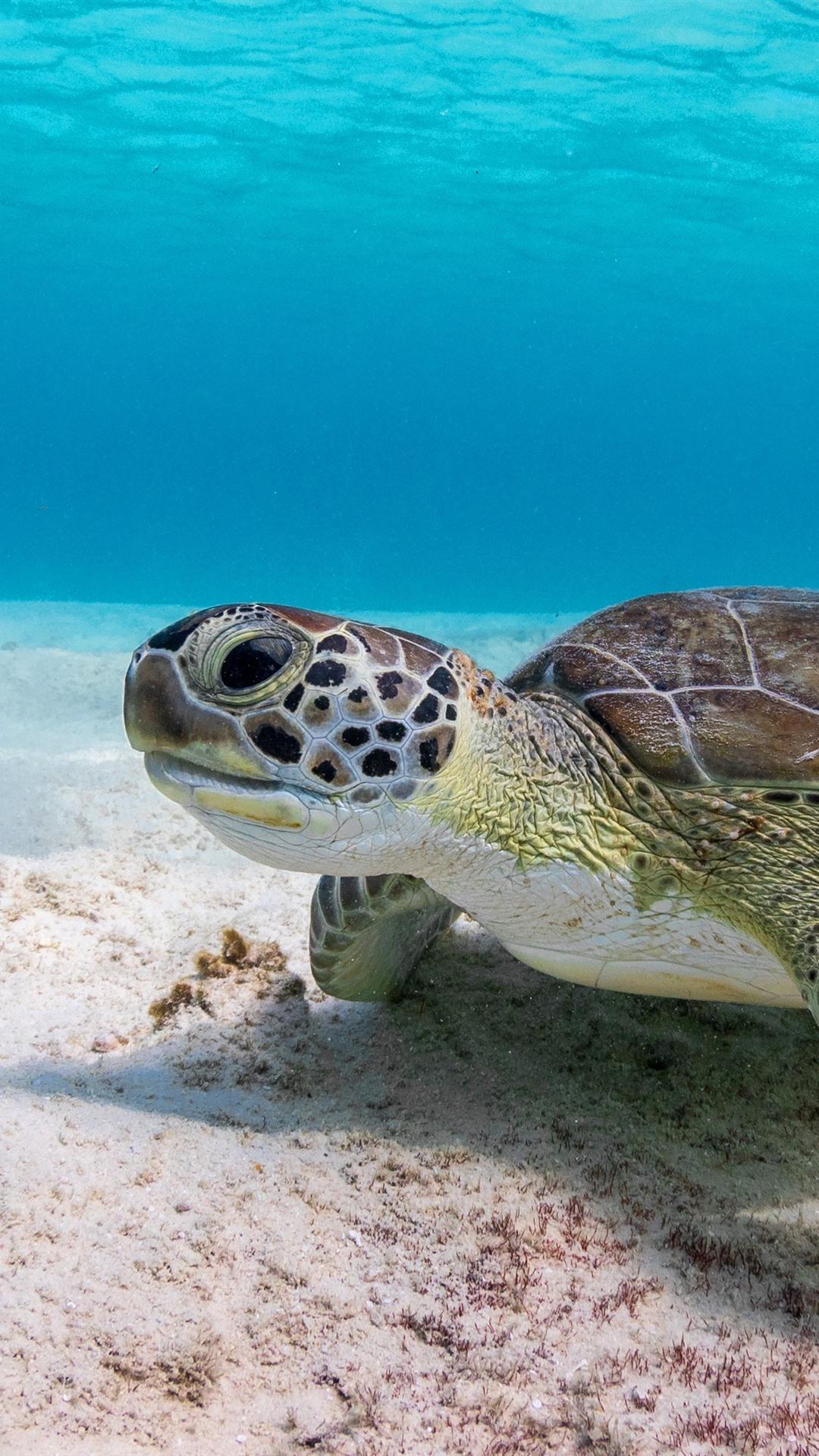 Wallpaper Turtle Underwater Sea 3840x2160 Uhd 4k Picture Image