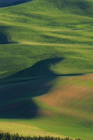 iPhone Fondos de pantalla Estados Unidos, Palouse, hermosos campos de trigo, verde, colinas