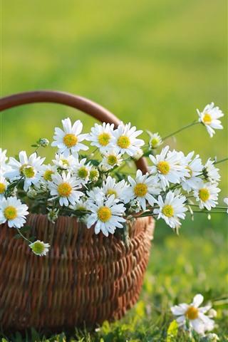 iPhone Fondos de pantalla Manzanilla blanca, cesta, hierba verde, verano