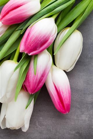 iPhone Fondos de pantalla Pétalos de rosa blanco tulipanes, fondo gris
