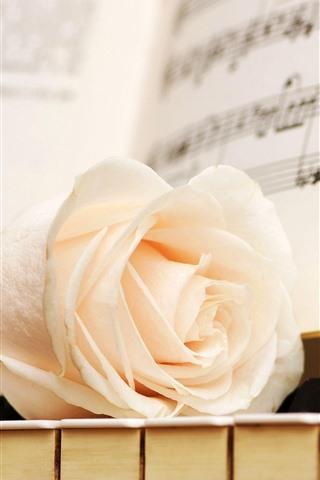 iPhone Fondos de pantalla Rosa blanca, teclas de piano, partitura