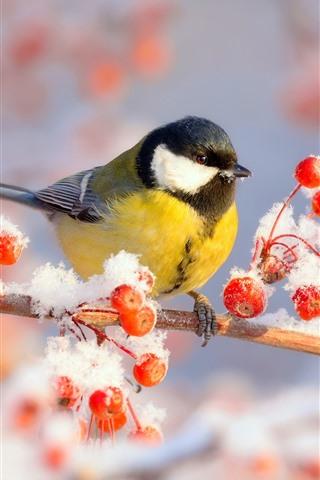 iPhone Hintergrundbilder Winter, Titten, Vogel, rote Beeren, Schnee