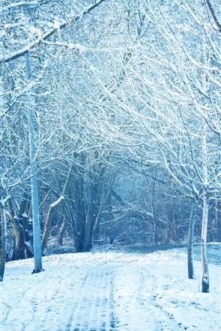 Winter Trees Snow Park Path 1242x2688 Iphone Xs Max