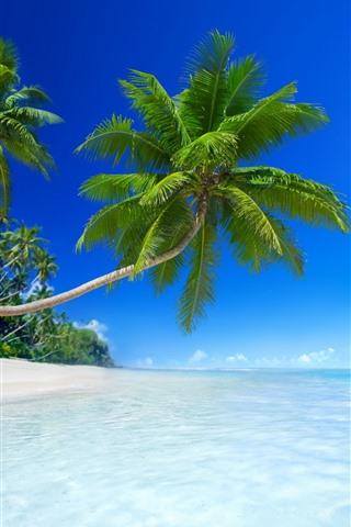 iPhone Wallpaper Beach, sea, sunshine, sailboats, palm trees, tropical