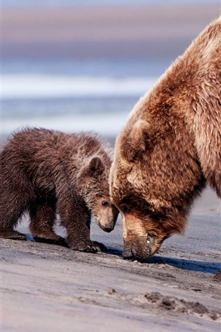 iPhone Wallpaper Bear mom and baby