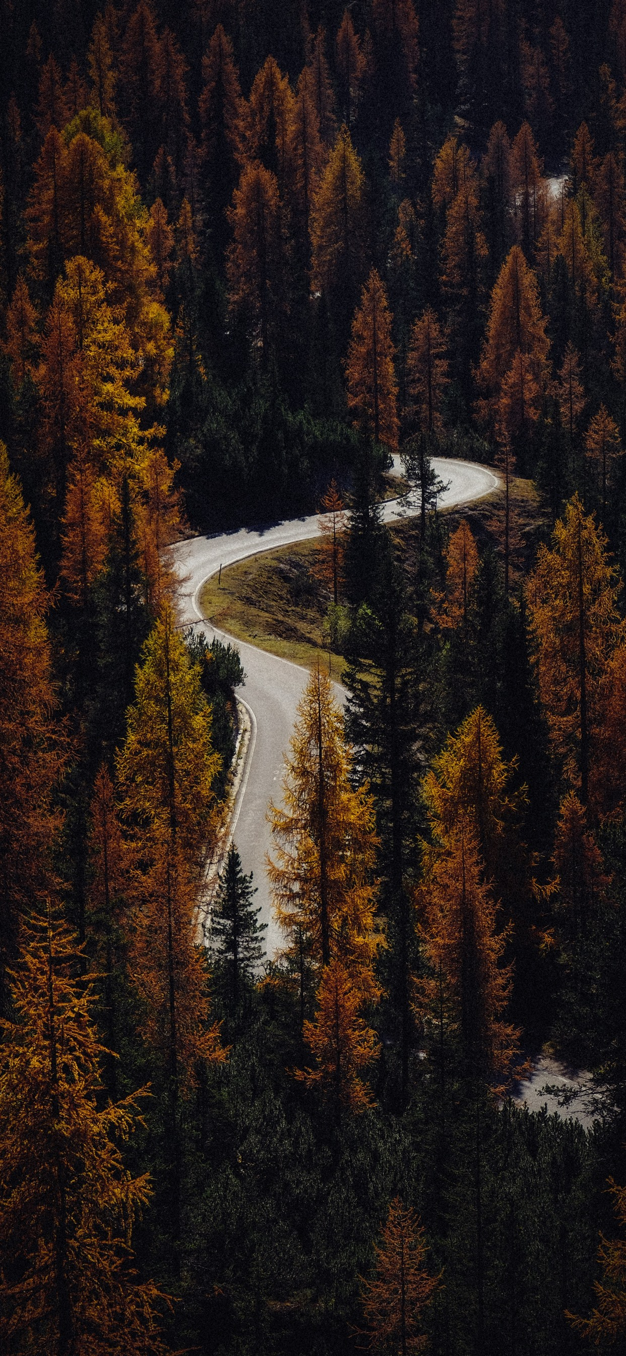 Bend Road Conifers Autumn 1242x2688 Iphone 11 Pro Xs Max Wallpaper Background Picture Image