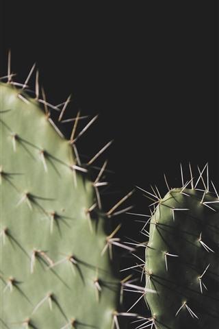 iPhone Fondos de pantalla Cactus, agujas, fondo negro