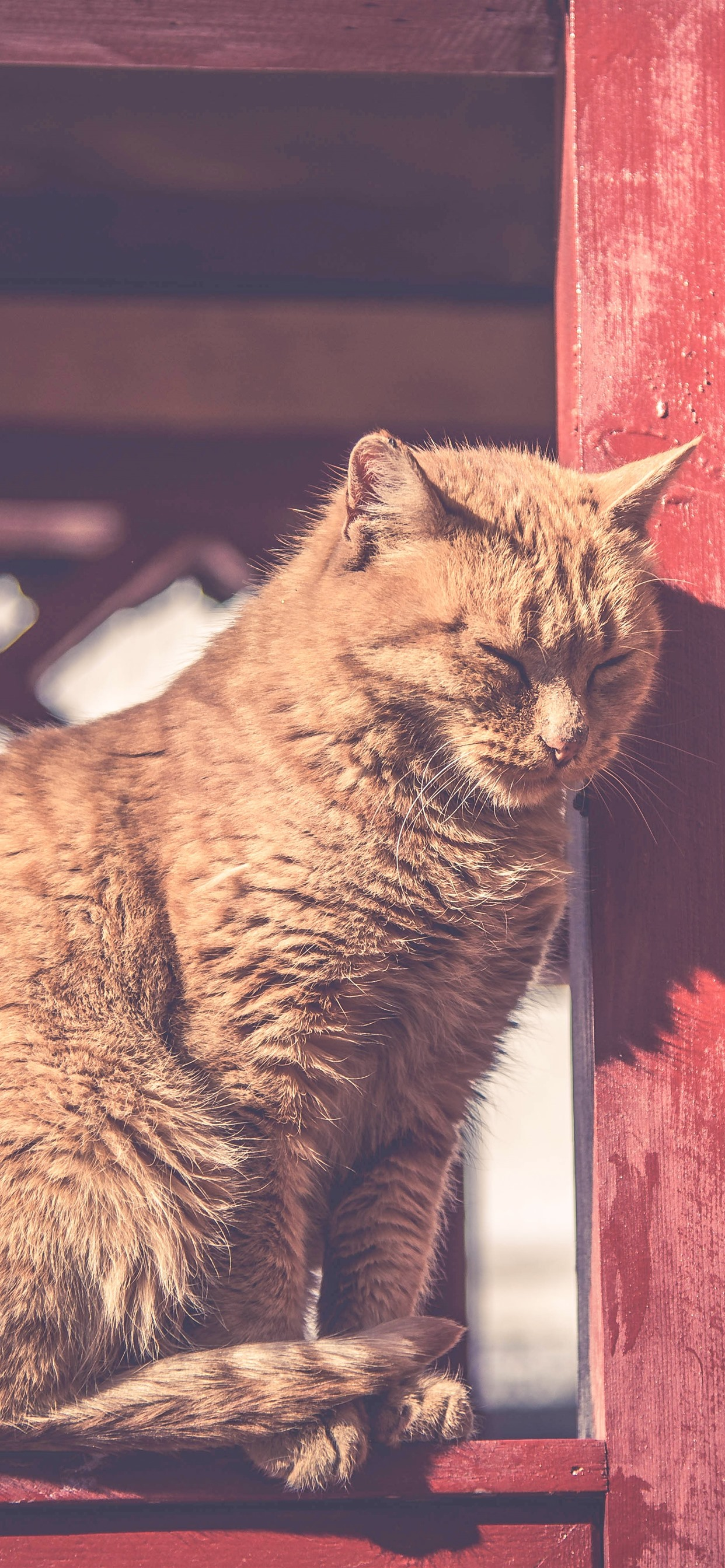 Cat Under Sunshine Rest Fence 1242x2688 Iphone Xs Max