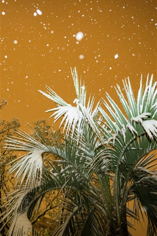 iPhone Wallpaper City, palm tree, leaves, snow, winter, night