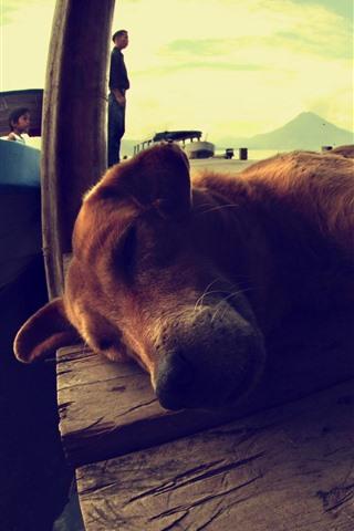 iPhone Wallpaper Dog rest, sleeping