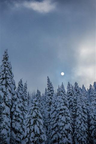 iPhone Fondos de pantalla Bosque de abetos, arboles, nieve, invierno, luna.