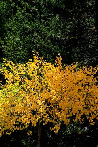 iPhone Fondos de pantalla Bosque, árbol, hojas amarillas