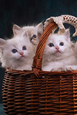 iPhone Wallpaper Four white kittens in a basket