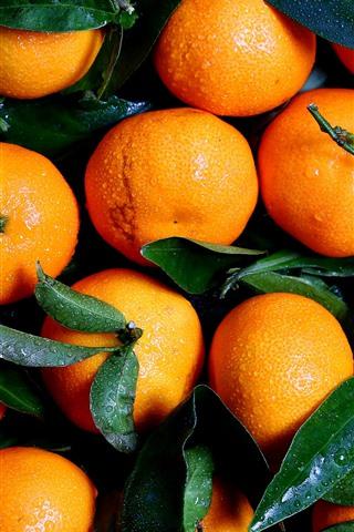 iPhone Wallpaper Fresh tangerines, water droplets