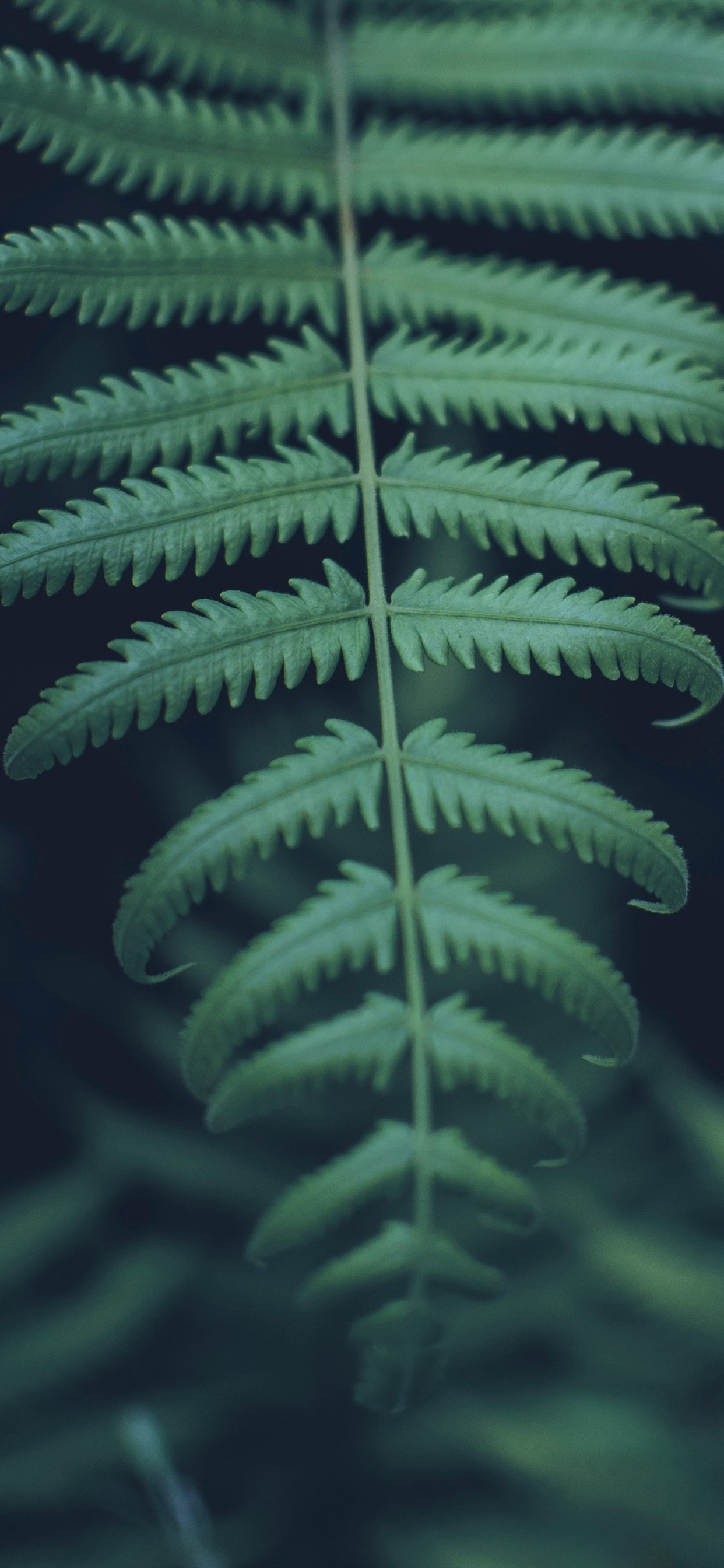 Green Fern Leaves Close Up 1242x2688 Iphone Xs Max Wallpaper