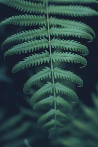 iPhone Fondos de pantalla Primer plano de hojas de helecho verde