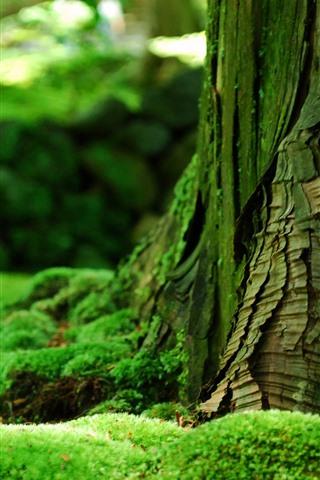 iPhone Wallpaper Green moss, trunk, hazy