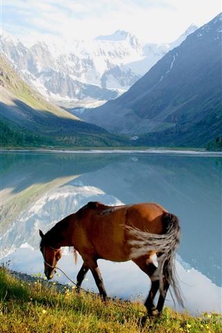 iPhone Wallpaper Horse, lake, mountains, nature
