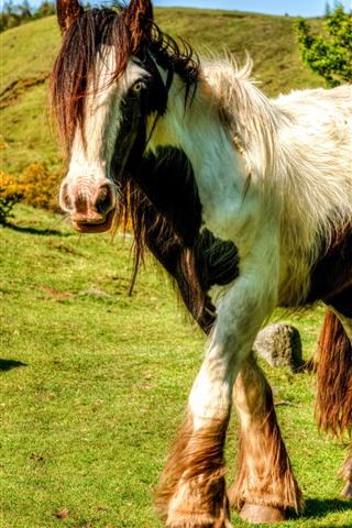 iPhone Wallpaper Horse walking, grass, sunshine, shadow