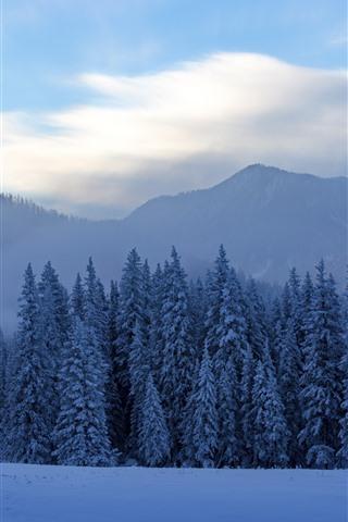 iPhone Wallpaper Kanas beautiful winter, trees, snow, fog, mountains, China