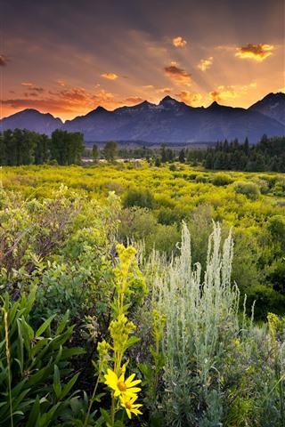 iPhone Wallpaper Nature landscape, mountains, trees, bushes, sunset