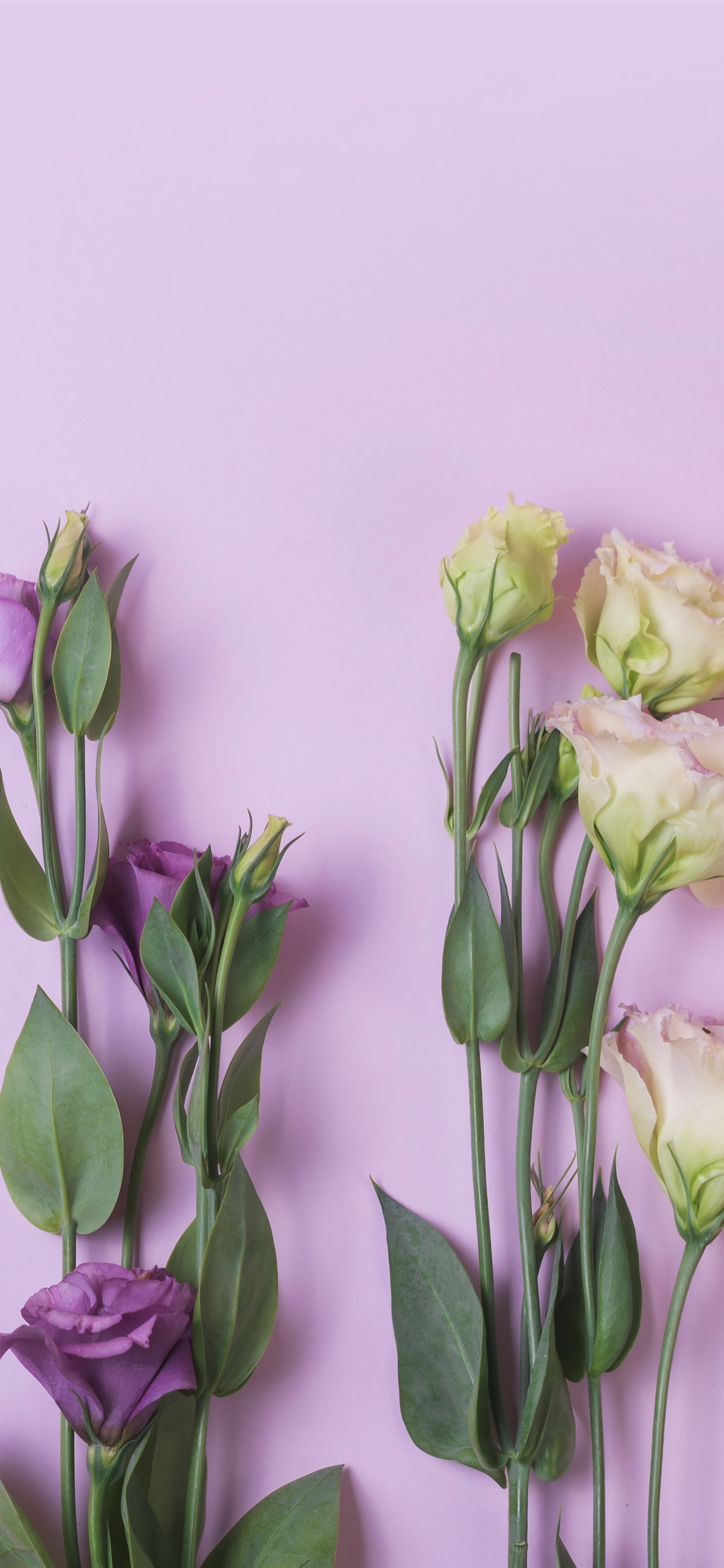 Pink Yellow Purple Eustoma Flowers 1242x2688 Iphone Xs
