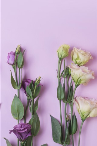 Pink Yellow Purple Eustoma Flowers 1242x2688 Iphone 11 Pro Xs Max Wallpaper Background Picture Image