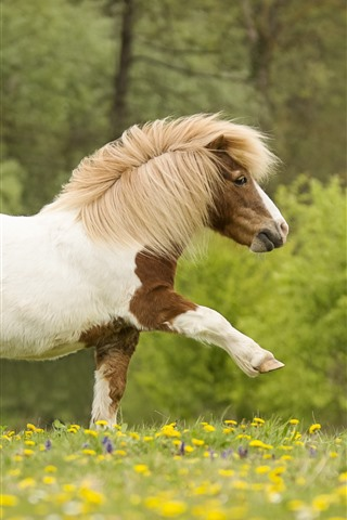 iPhone Wallpaper Pony walking, wildflowers