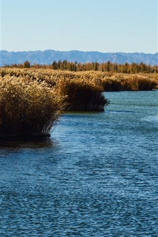 iPhone Wallpaper Reeds, swamp, water, autumn