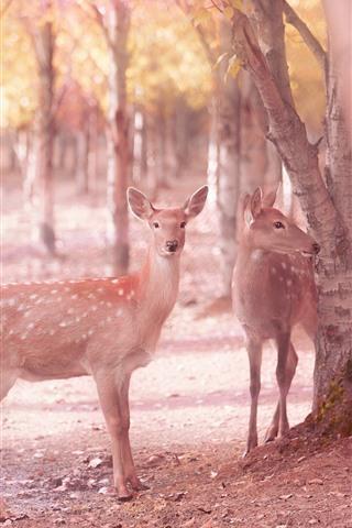 iPhone Fondos de pantalla SIKA Deers, árboles, brujería