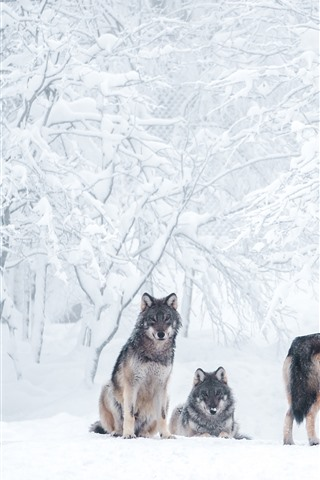 iPhone Wallpaper Some wolves, thick snow, trees, winter
