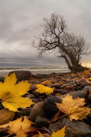 iPhone Fondos de pantalla Piedras, hojas de arce amarillo, árbol, mar, otoño