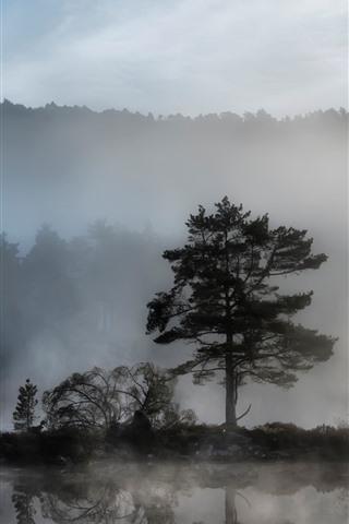 iPhone Wallpaper Trees, fog, river, dawn
