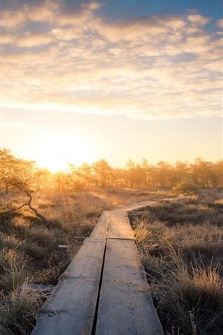 iPhone Fondos de pantalla Árboles, césped, sendero de madera, amanecer, mañana